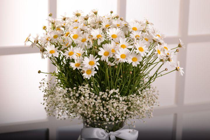 Papatyaların Dansı Aranjmanlar çiçek gönder