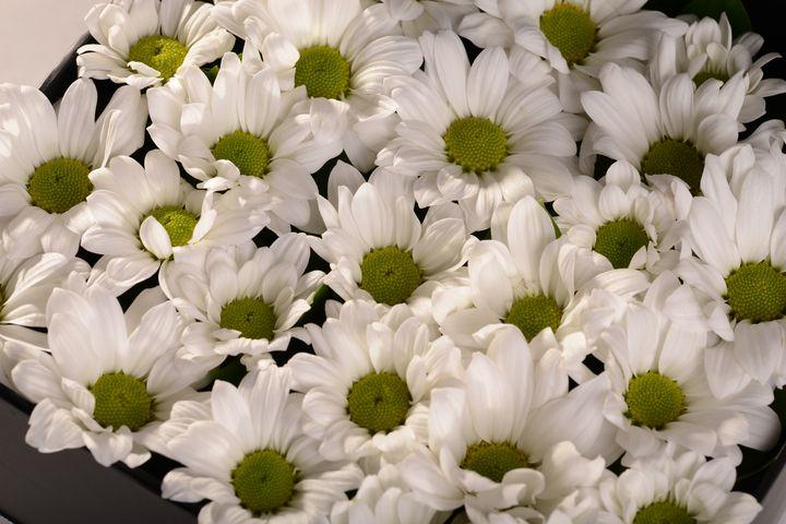 Beyazın Gizemi... Kutuda Aranjmanlar çiçek gönder