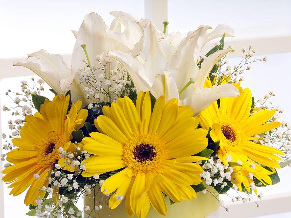 Sarı Silindir Kutuda Beyaz Lilyum ve Sarı Gerberalar Kutuda Çiçek çiçek gönder