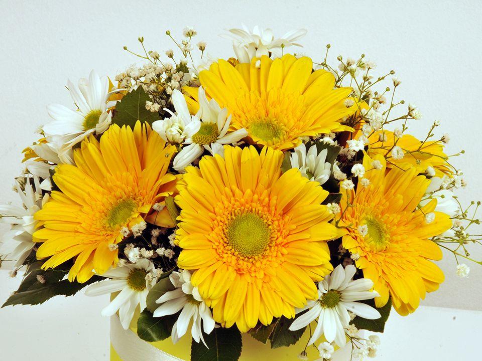Sarı Silindir Kutuda Alman Papatyaları Kutuda Çiçek çiçek gönder
