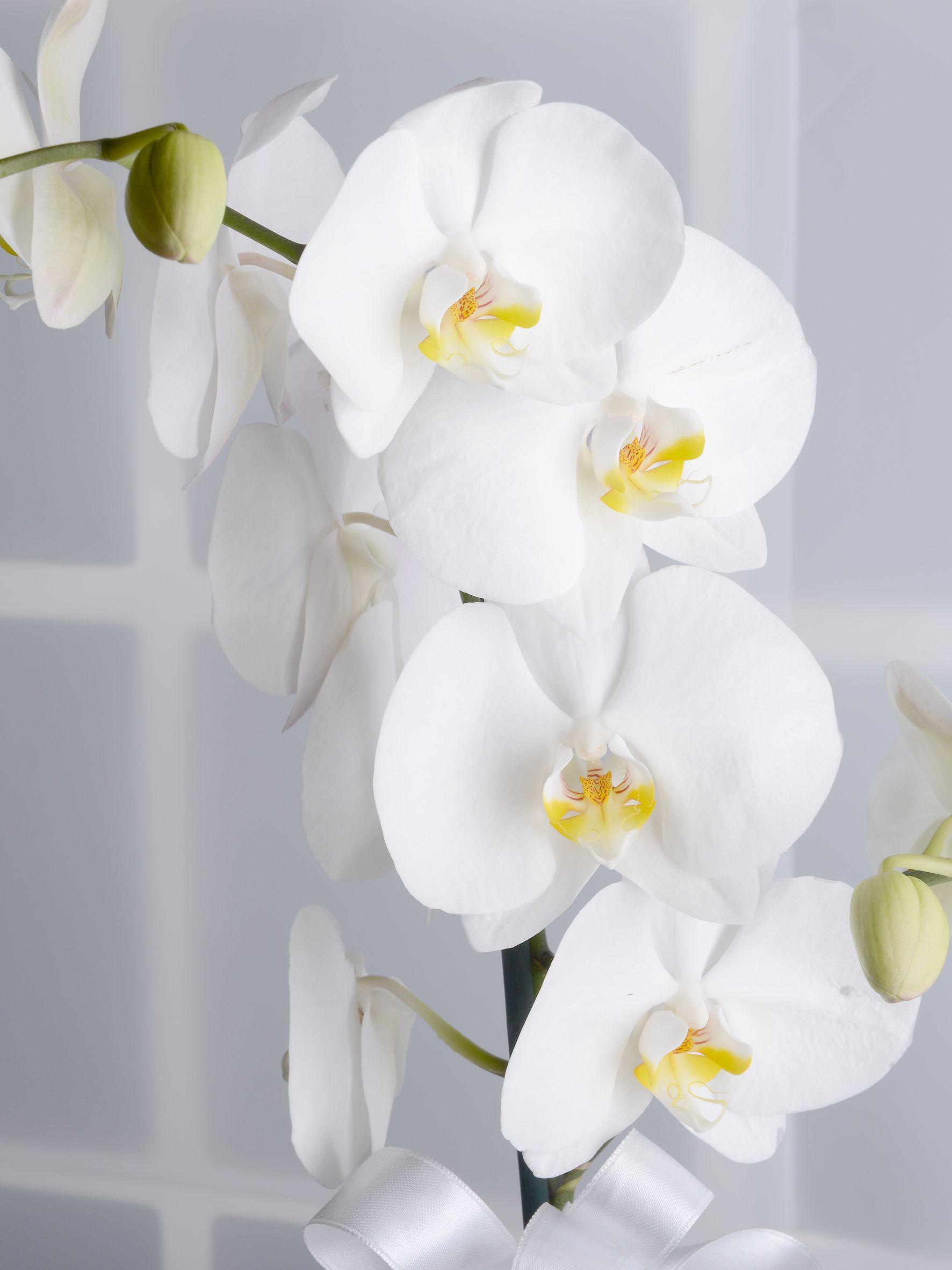 Tek Dallı Beyaz Orkide Çiçeği Orkideler çiçek gönder