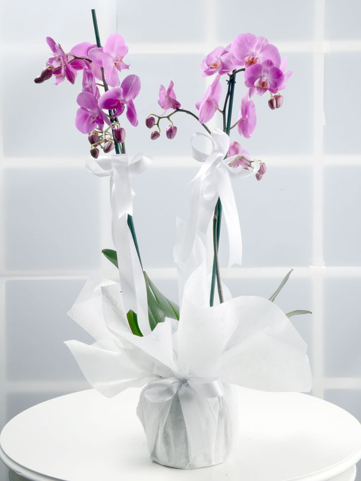 Toprak Kokusu Pembe Orkide Çiçeği Orkideler çiçek gönder