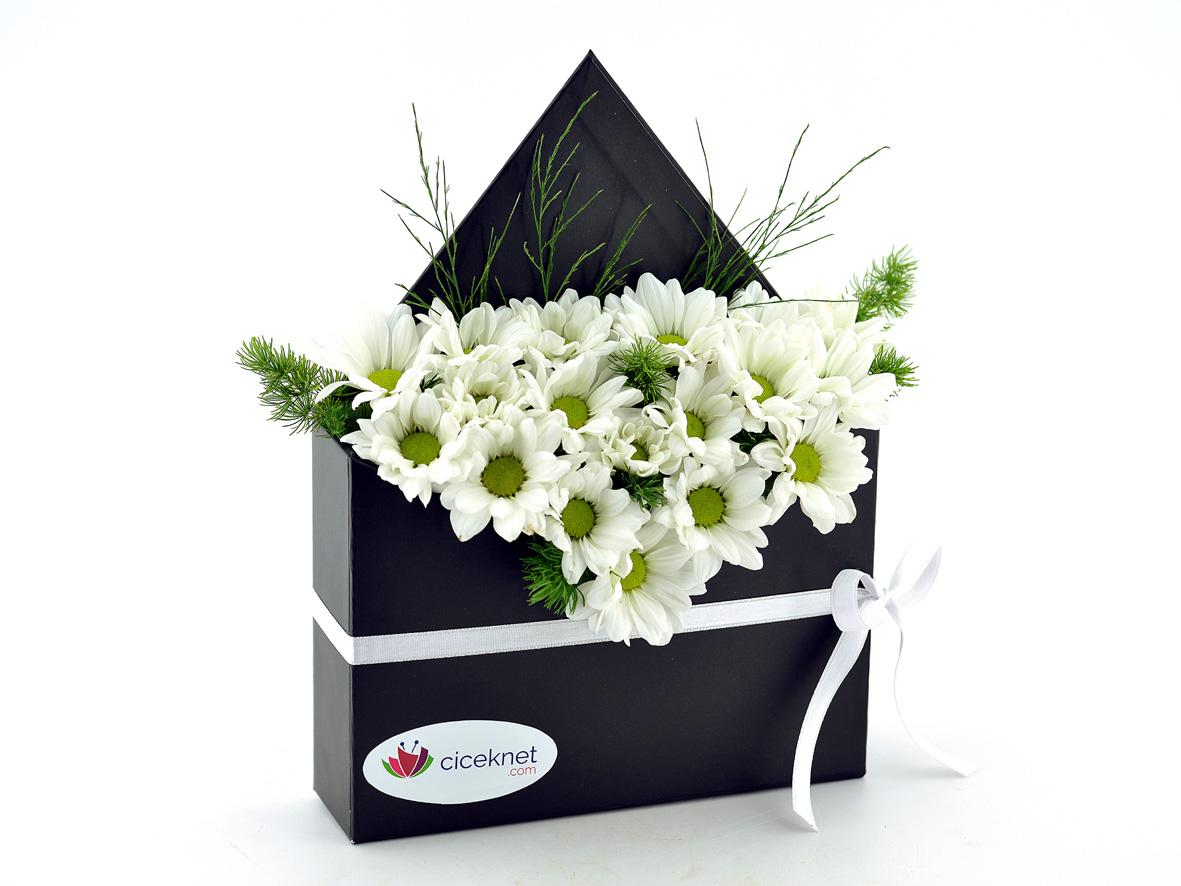 Zarf Dolusu Papatya Bahçesi Kutuda Çiçek çiçek gönder