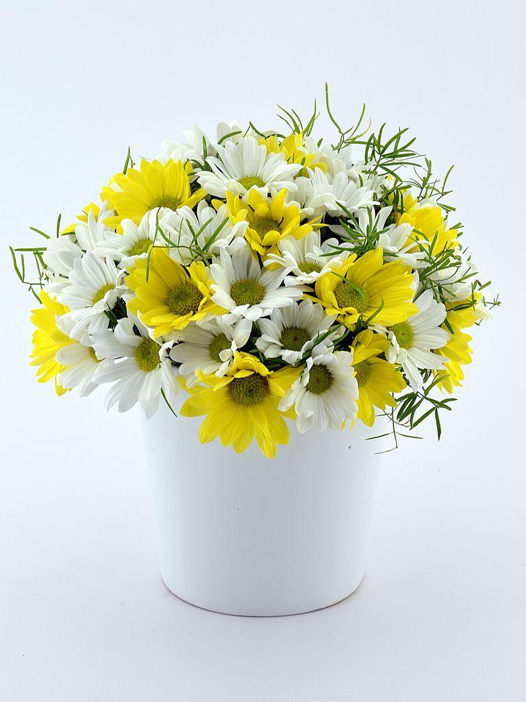 Sarı Beyaz Papatya Aranjmanı  çiçek gönder