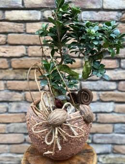 Bonsai Ginseng Tasarım  çiçek gönder