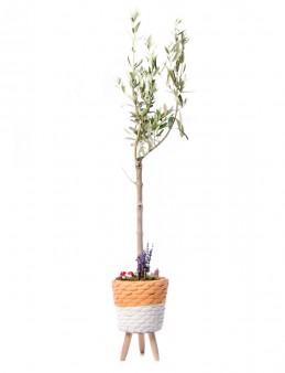 Auctore Serisi Zeytin Ağacı Tasarım  çiçek gönder