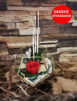 Geometrik Cam Vazoda Kırmızı Solmayan Gül  çiçek gönder