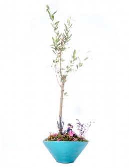 Cannae Serisi Zeytin Ağacı Tasarım  çiçek gönder