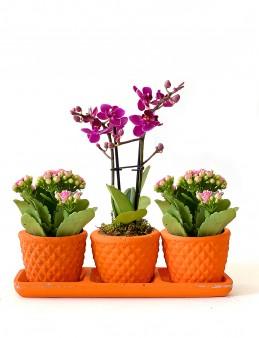 Kalanchoe ve Orkidenin Eşsiz Uyumu  çiçek gönder