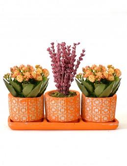 Turuncu Trio da Bitki Arajmanı  çiçek gönder
