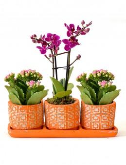Özel Tasarım Kalanchoe ve Orkide Bitkisi  çiçek gönder