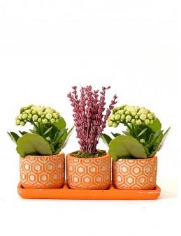 Özel Tasarım 3'lü Set   çiçek gönder
