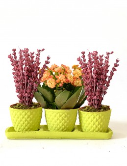 Mis Kokulu Lavantalar ve Kalanchoe Çiçeği  çiçek gönder