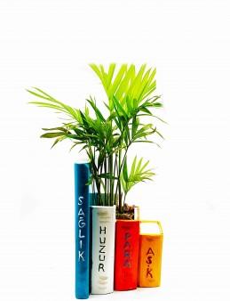 Kitap Saksı Chamadore Bitkisi  çiçek gönder