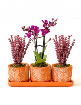 Lavanta ve Orkidenin Uyumu Orkideler çiçek gönder