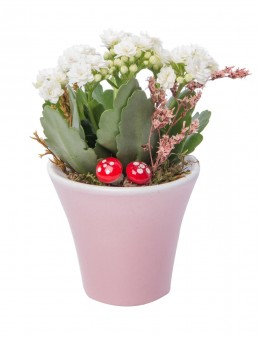 Moster Serisi Kalanchoe Tasarım  çiçek gönder