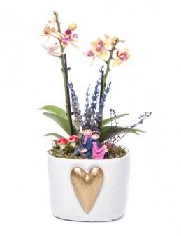 Cuore Serisi Sarı Orkide Tasarım Orkideler çiçek gönder