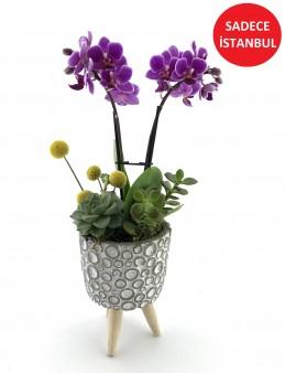Baloncuk Desenli Saksı da Mini orkide ve Sukulent  çiçek gönder