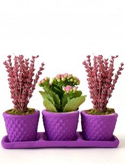 Bir Bahar Akşamı 3'lü Bitki Seti  çiçek gönder