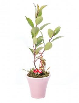 Moster Serisi Alev Çiçeği Tasarım  çiçek gönder
