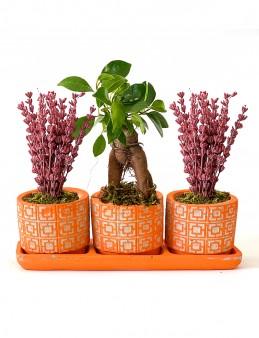 Mis Kokulu Lavanta ve Bonsai Bitkisi  çiçek gönder