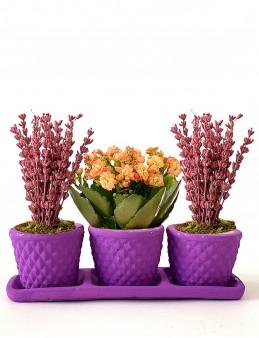 Bahar Kokusu 3'lü Bitki Seti  çiçek gönder