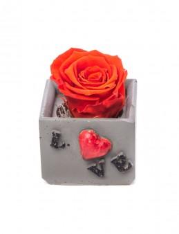 Lover Serisi Kırmızı Renk Şoklanmış Gül Tasarım  çiçek gönder