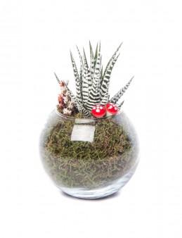 Locuis Serisi Howarthia Tasarım  çiçek gönder