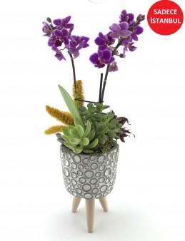 Asaletli Mor 2 Dal Orkide  çiçek gönder