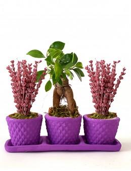 3'lü Lavanta ve Bonsai Bitki Seti  çiçek gönder