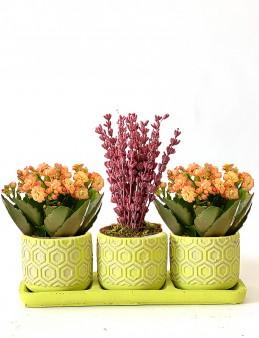 Lavanta ve Kalanchoeların Mis Kokulu Dansı  çiçek gönder