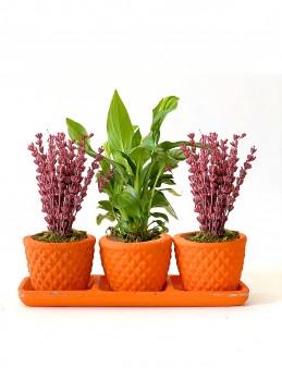 Özel Tasarım 3'lü Bitki Seti  çiçek gönder