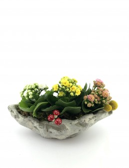Gondol Beton Saksıda Kalanchoe  çiçek gönder