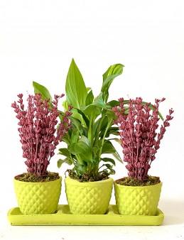 Mis Kokulu Lavanta ve Spathiphyllum Bitkisi  çiçek gönder
