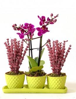 Mini Orkide ve Mis Kokulu Lavantaların Uyumu  çiçek gönder