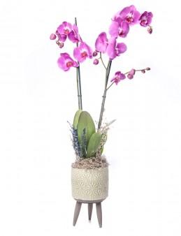 Auctore Serisi Orkide Tasarım  çiçek gönder