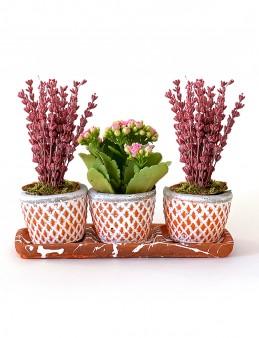 Kalanchoe ve Lavantaların Dansı  çiçek gönder