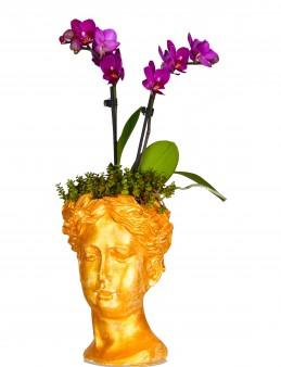 Helen'de Orkide Bir Başka  çiçek gönder
