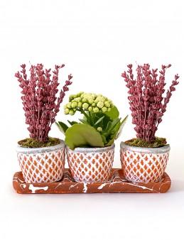 Mis kokulu Lavanta ve Kalanchoe   çiçek gönder