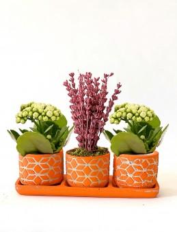 Özel Tasarım Kalanchoe ve Lavanta Aranjmanı  çiçek gönder