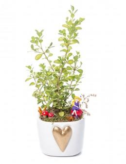 Cuore Serisi Buxus Bonsai Tasarım  çiçek gönder
