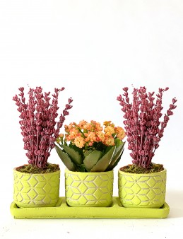 Muhteşem Üçlü Bitki Seti  çiçek gönder