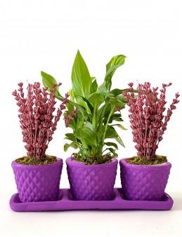 Lavantalar ve Spathiphyllum'un Uyumu  çiçek gönder
