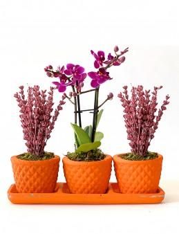 Orkide ve Lavantanın Uyumu  çiçek gönder