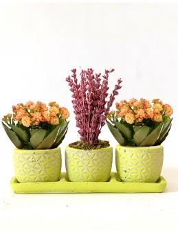 Lavanta ve Kalanchoe Bahçesi  çiçek gönder