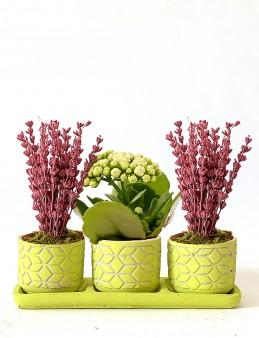 Tasarım Harikası Kalanchoe ve Mis Kokulu Lavanta  çiçek gönder