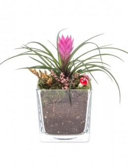 Abiete Serisi Tillendsia Tasarım  çiçek gönder