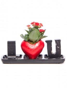 Amore Serisi Kalanchoe Tasarım  çiçek gönder