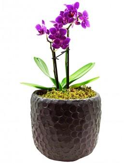 Siyah Taş Saksıda İki Dal Mini Orkide  çiçek gönder