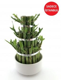 Set Şans Bambu  çiçek gönder